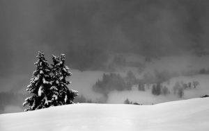 Heart of Winter - Jennifer Fockler Chicago Acupuncture